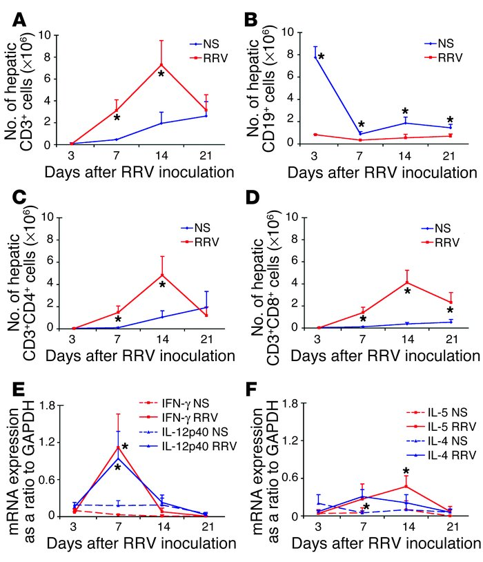 RRV infection results in Th1 polarization of hepatic lymphocytes. Hepati...