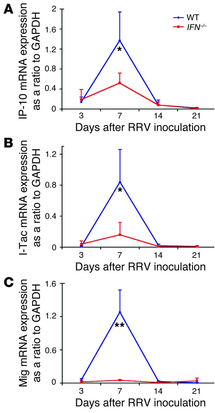 Impaired expression of chemokines following RRV challenge of IFN-γ–/– mi...