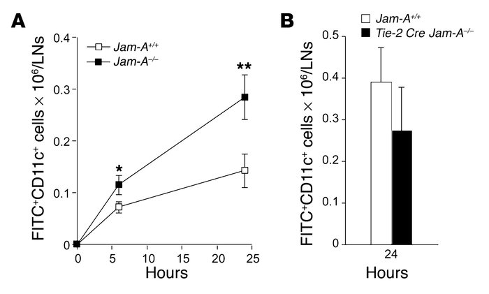 Increased in vivo migration of cutaneous DCs in Jam-A –/– mice. (A) Time...