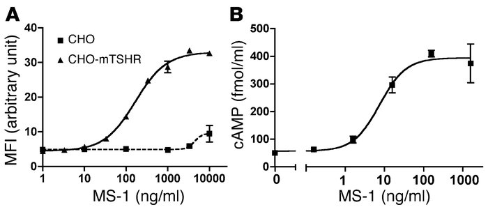 Mouse TSHR binding and stimulation by MS-1 in vitro. (A) Binding of MS-1...