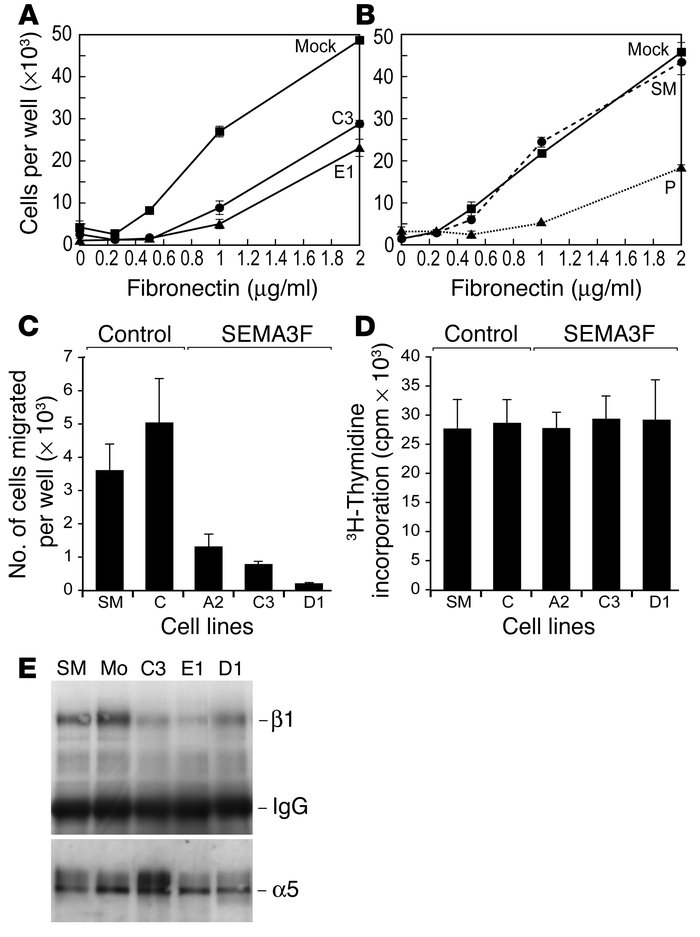 SEMA3F inhibits adhesion and migration, but not proliferation, of tumor ...
