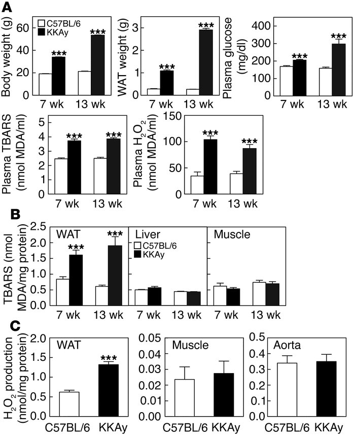 Increased oxidative stress in plasma and WAT of obese KKAy mice. (A) Bod...