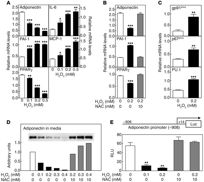 Effects of ROS on gene expressions in 3T3-L1 adipocytes. (A and B) The m...
