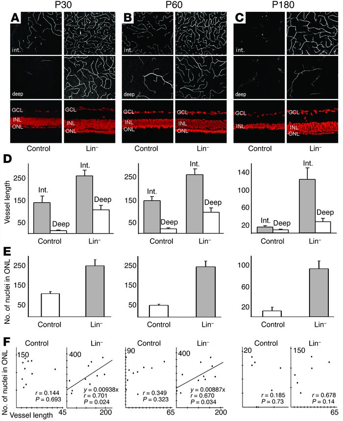 Lin– HSC injection rescues the degeneration of vascular and neural cells...