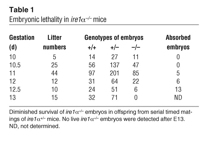 Embryonic lethality in ire1α–/– mice