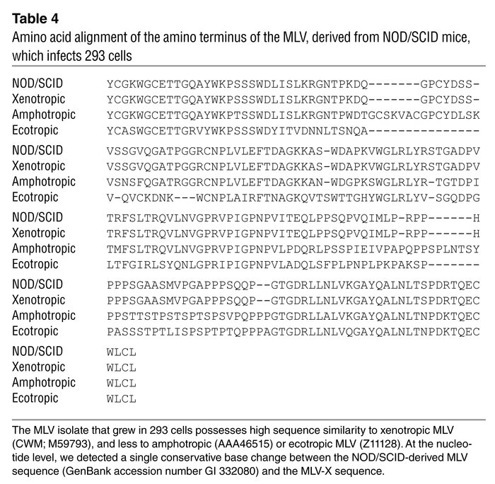 Amino acid alignment of the amino terminus of the MLV, derived from NOD/...