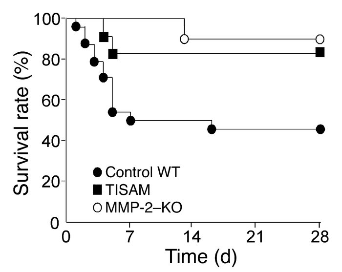 Survival of the WT, TISAM-treated, and MMP-2–KO mice after MI. Lifespan ...