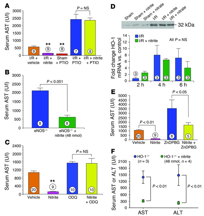 Nitrite-mediated hepatoprotection and the NO and HO-1 signaling pathways...