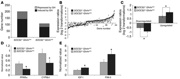 SOCS2 regulates GH-induced gene expression in the liver. (A) The number ...