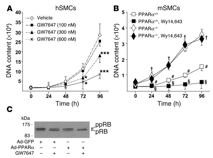 PPARα inhibits SMC G1/S progression. (A and B) G1-arrested hSMCs (A) and...