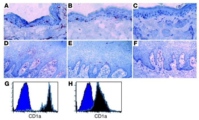 Immunohistochemical analysis of LCs in skin and vagina. Representative d...