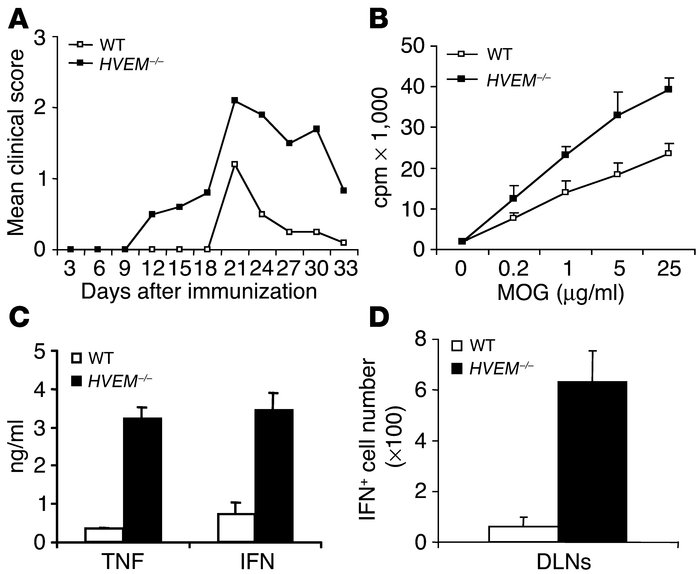 Increased susceptibility to developing EAE in HVEM –/ – mice. Developmen...