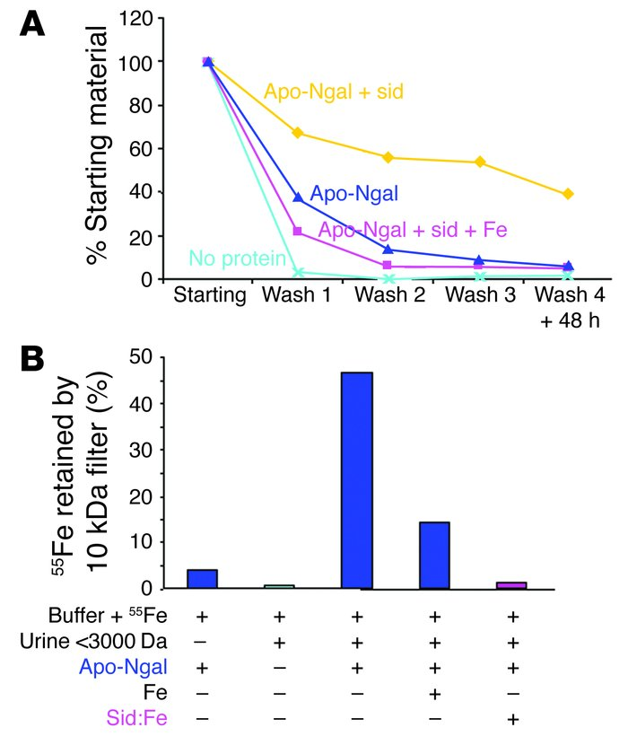 Iron-binding cofactor in urine. (A) Buffer was mixed with 55Fe (No prote...