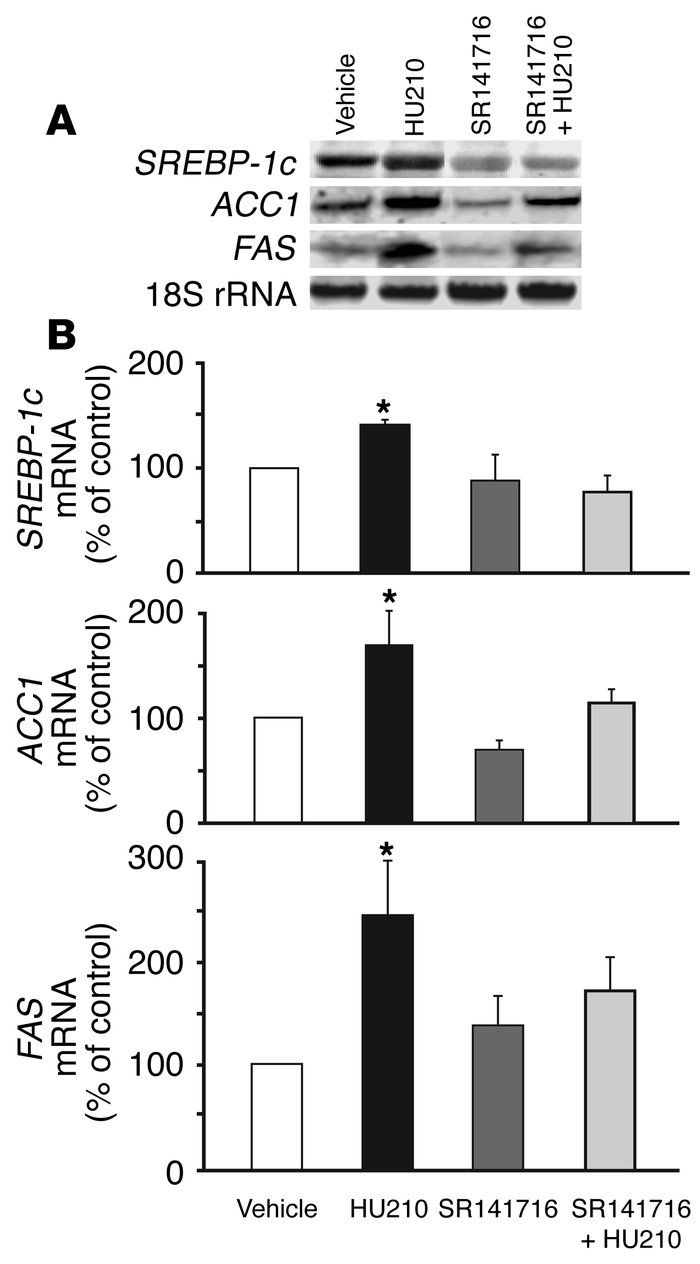 Activation of CB1 increases the gene expression of SREBP-1c, ACC1, and F...