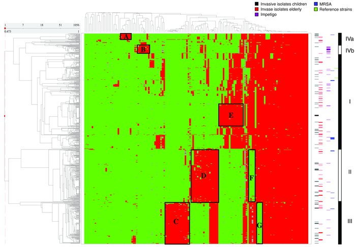 2D hierarchical clustering of the 1,056 S. aureus strains. The green/red...