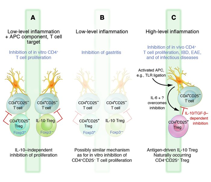 Layers of regulation of the immune response. At low levels of inflammati...