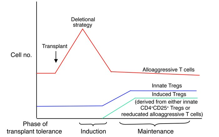 Altering the balance between alloaggressive and Treg subsets. Deletional...