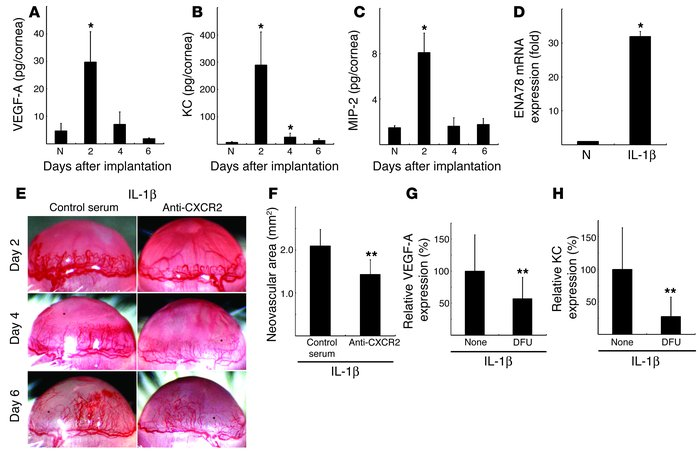 The effect of anti-CXCR2 Ab on IL-1β–induced angiogenesis. Kinetics of p...