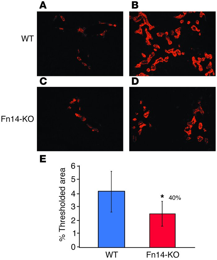 DDC-fed Fn14-KO mice have reduced proliferation of A6-expressing oval ce...