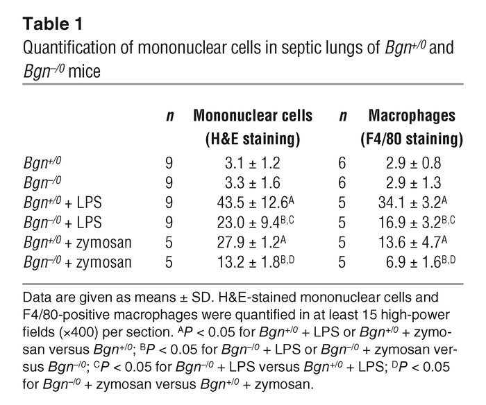 Quantification of mononuclear cells in septic lungs of Bgn+/0 and Bgn–/0...