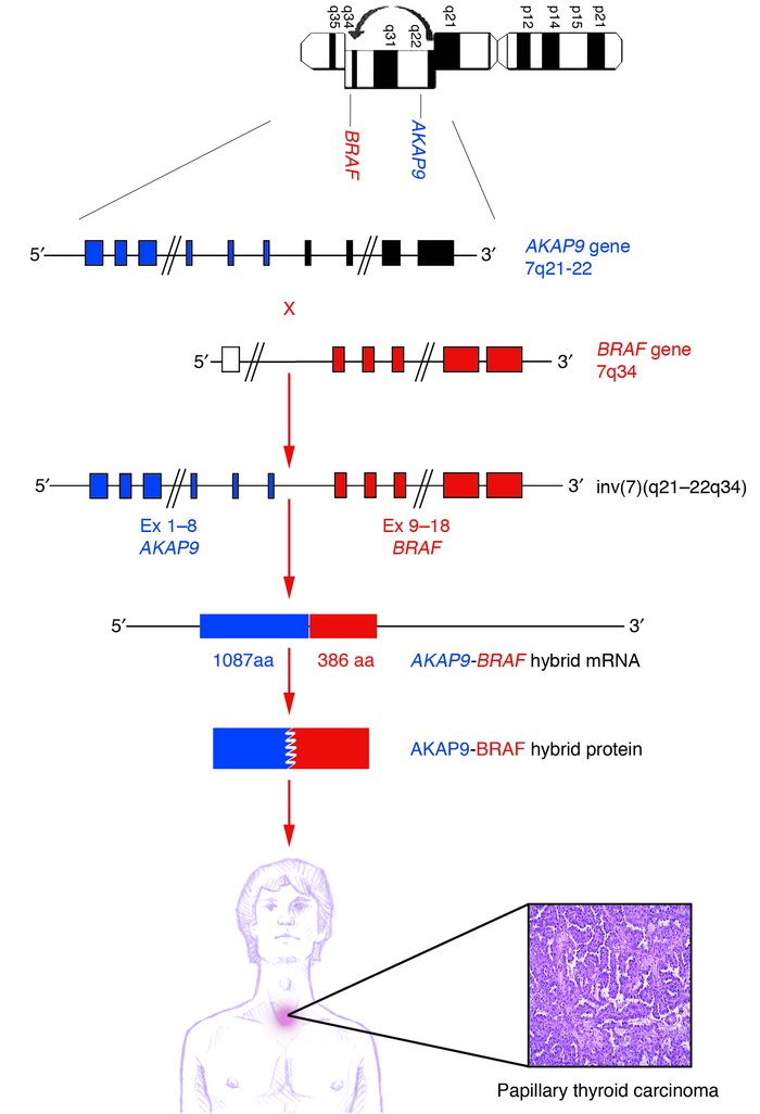 Molecular mechanism of the chromosomal rearrangement generating the tran...