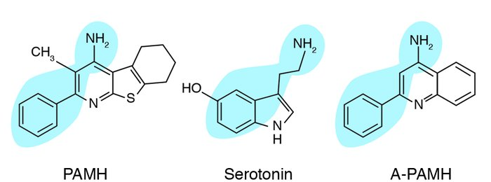 Structures of serotonin, PAMH, and A-PAMH.