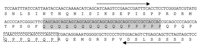 Nucleotide and amino acid sequences of the repeat region in MEF2A. The s...
