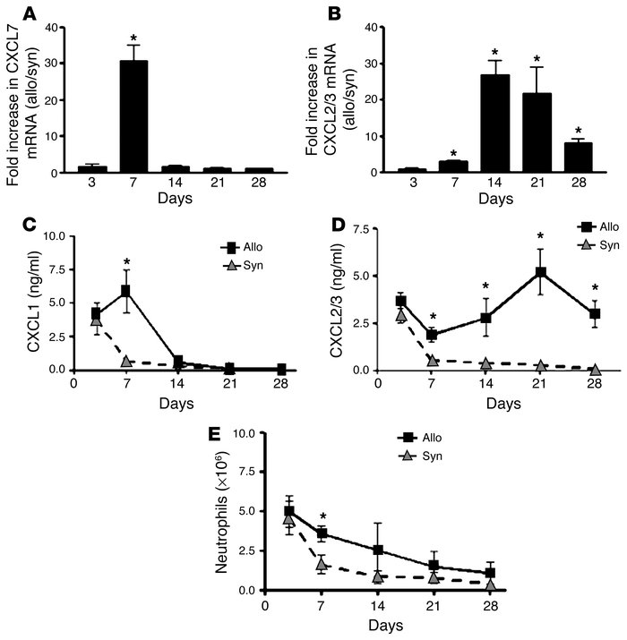 ELR+ CXC chemokines are elevated during the pathogenesis of murine BOS. ...