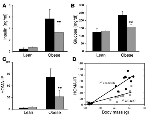 Insulin sensitivity in obese Ccr2–/– and obese Ccr2+/+ mice.            ...