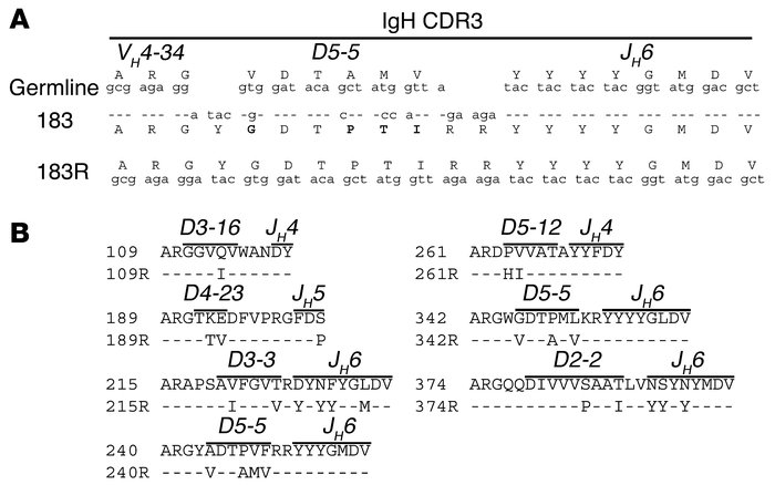 IgH CDR3 sequences of unmutated revertant antibodies engineered from M-C...