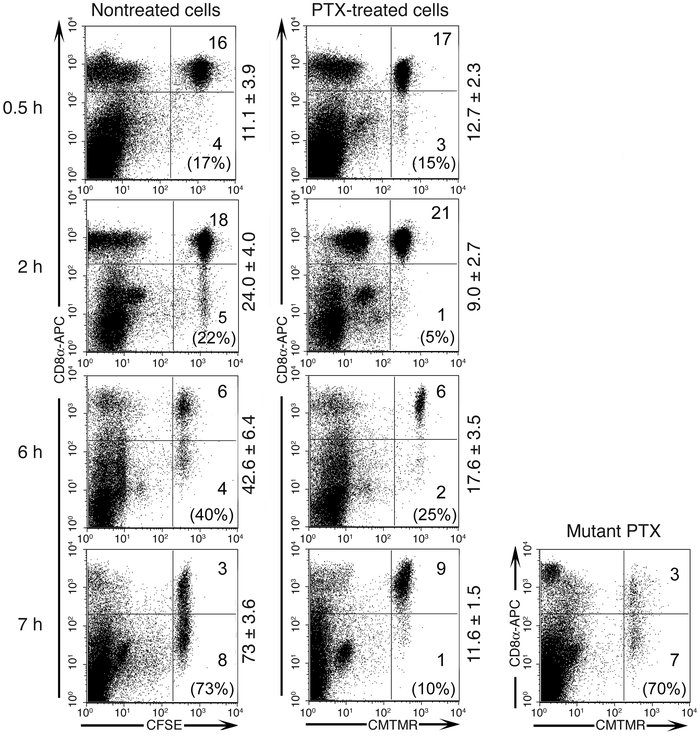 Migration of effector CD8+ T cells into the lung interstitium is PTX-sen...