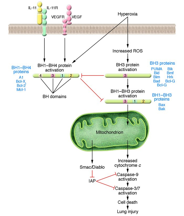 Schematic representation of the cell-death pathways activated by exposur...