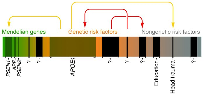 This scheme depicts the risk spectrum predisposing to common diseases as...