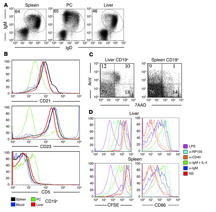 Phenotypic and functional characterization of IHB cells. (A) Lymphocytes...
