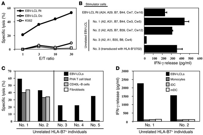 Specific reactivity of HLA-B*0702–restricted CTL RP1 against hematopoiet...
