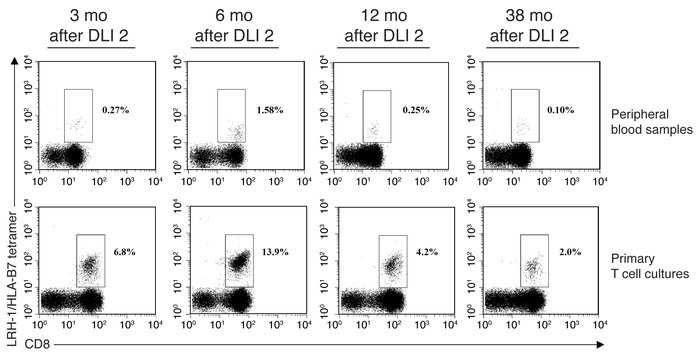 Detection of LRH-1–specific CD8+ T cells in peripheral blood of CML pati...