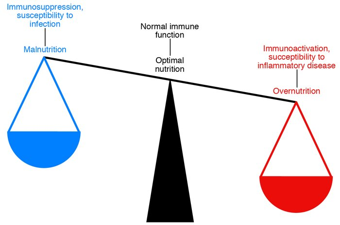 Metabolism and immunity are closely linked. Both overnutrition and under...