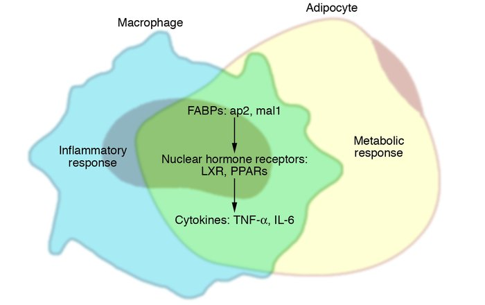 Lipids and inflammatory mediators: integration of metabolic and immune r...