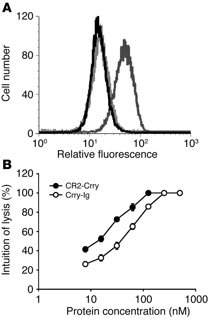In vitro characterization of recombinant CR2-Crry and Crry-Ig. (A) Flow ...