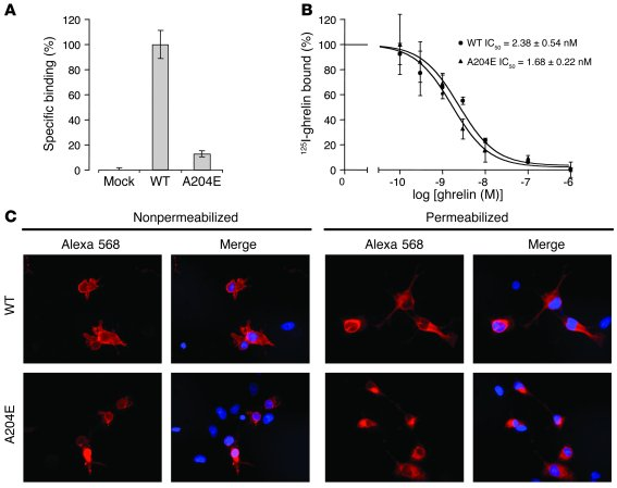 Expression of the A204E mutant GHSR1a at the cellular level. (A) Specifi...