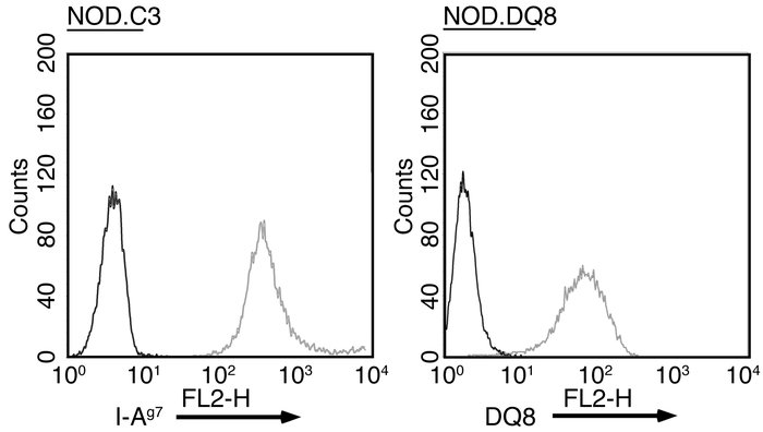 Class II MHC expression among APC lines. NOD.C3 and NOD.DQ8 cells were s...