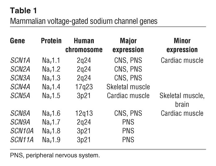 Jci Sodium Channel Mutations In Epilepsy And Other
