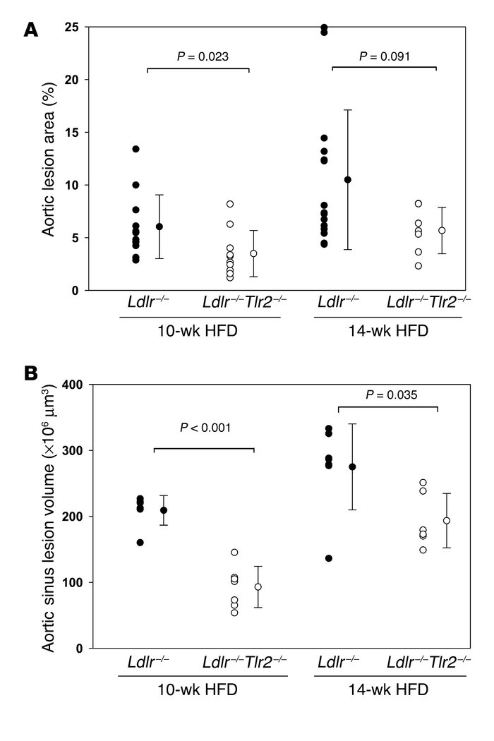 Measurement of atherosclerosis in male Ldlr–/– and Ldlr–/–Tlr2–/– mice a...