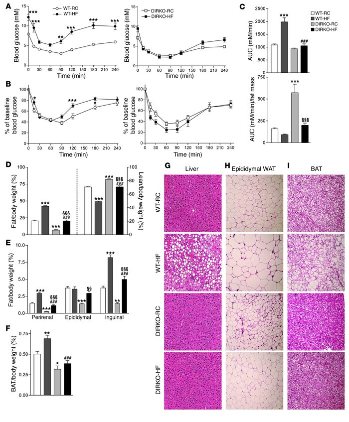 DIRKO mice are protected from HF diet–induced insulin resistance. (A) Gl...