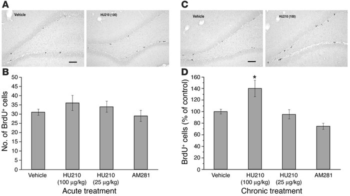 Effects of HU210 treatment on cell proliferation in the dentate gyrus in...