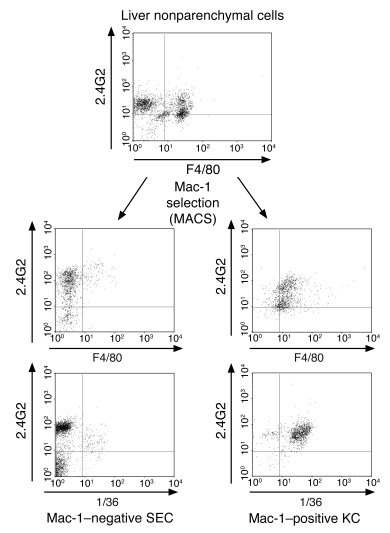 Coexpression of C5aR and FcγR on Mac-1–positive liver Kupffer cells. Liv...