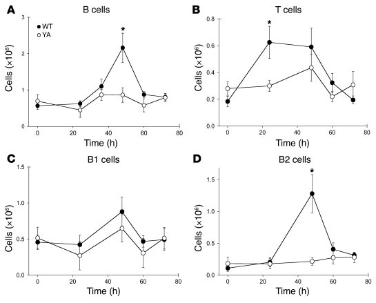 Impaired recruitment of T and B2 cells during thioglycollate-induced per...