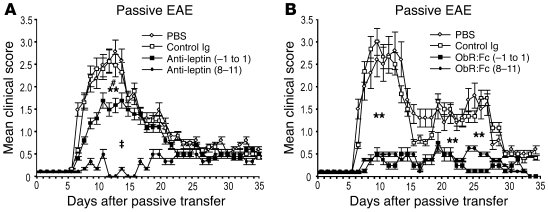 Leptin blockade during adoptively transferred EAE with either anti-lepti...