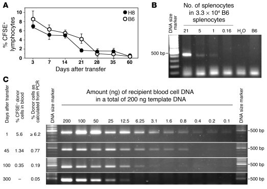 Long-lasting chimerism after adoptive transfer of H8 splenocytes and its...