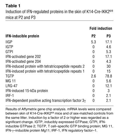 Induction of IFN-regulated proteins in the skin of K14-Cre-IKK2fl/fl mic...